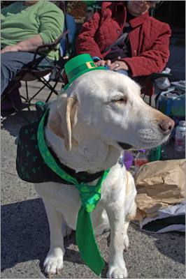 Jake, the dog, is also decked out for the holiday. He sat with owner Sandy Meyerowitz, from Marshfield.