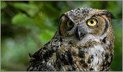 Bird-watching at Mount Auburn