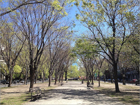 The Commonwealth Avenue Mall that runs from the Boston Public Garden to Kenmore Square recently received a makeover. The branches of 60 elms lining the mall were pruned to distribute weight among the branches, prevent falling branches, and help older trees grow.