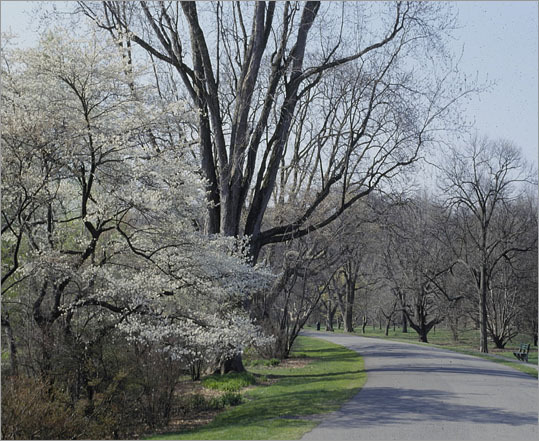 4. Arnold Arboretum This 125-year-old Boston city park was once closed to bicycles, but not anymore. With its 265 acres of exquisite flowers and blooming trees, this bike trip might make you forget you&#146;re in a city. The Arboretum hosts a variety of activities; check its online calendar for more information. (Note: bikes are permitted on paved trails only.)