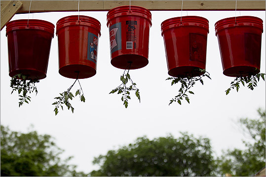 A detail shot of the buckets with the upside down tomato buckets.