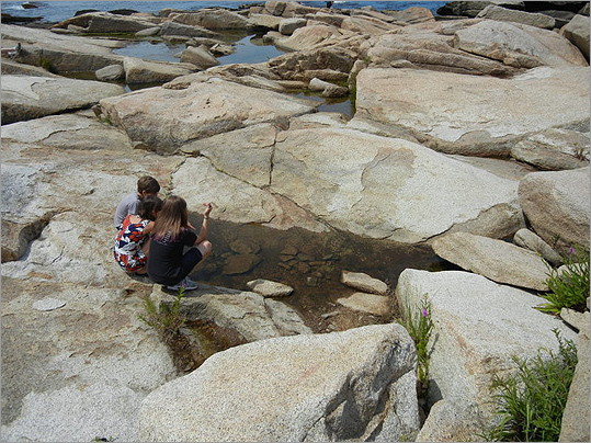 Halibut Point State Park, Rockport Scrambling over rocks and checking out the many tidal pools at Halibut Point is a thrill for sea-life-loving kids.
