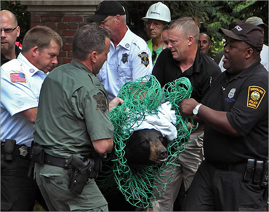 """The bear is doing fine,'' Brookline Police Chief Daniel C. O'Leary told a reporter. ""Bears are resilient animals. ''"