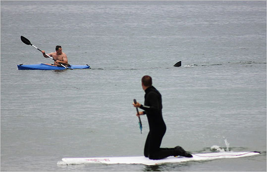 A kayaker looked at the dorsal fin of an approaching shark at Nauset Beach in Orleans on Saturday.