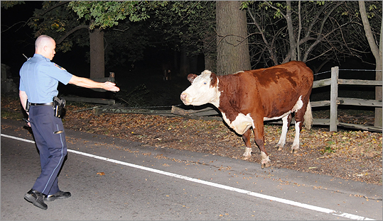 """That was one of those ones that took off like wildfire,"" he said. ""They were calling Ron 'the Cow Whisperer.'"" Whittemore regularly receives calls from the media about his sometimes-goofy Web offerings. Wellesley residents recognize officers from Whittemore's pictures on the streets. ""We want to connect to the people,"" he said. ""For us, that's what community policing is all about."""