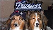 Patriot pets