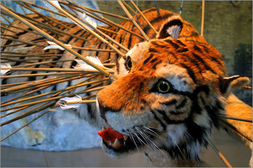 An image of a tiger encircles one room at Mass MoCA, literally surrounding viewers with art.