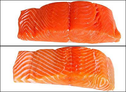 Wild salmon (top) and farmed salmon (bottom)