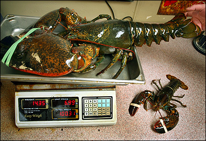Lobsters at James Hook and Company