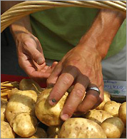 Michael Leviton checks potatoes