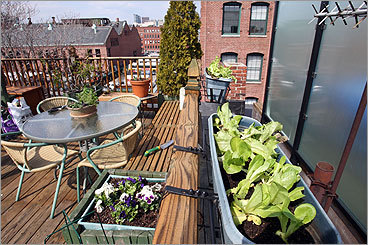 How to plant an urban vegetable garden - Boston.