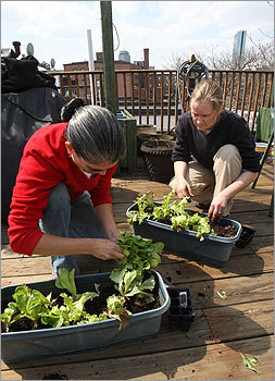 Recently I helped some friends create a ve able garden on their South End roof deck