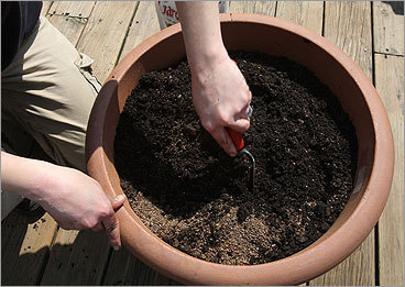 Make a hole slightly larger than the rootball and insert the plant so its rootball is below the soil line.