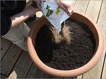We used a Scotts brand garden soil mixed with a compost from a local community garden. Another trusted soil for container gardening is Coast of Maine's Cobscook Blend Gardening Soil premixed with compost and peat moss for aeration. Some mixes contain fertilizers. We added an organic fertilizer to provide an extra nutrient boost. We also lightly moistened and mixed the soil before adding to the container. Fill to within two inches of the rim.