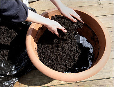 Choosing appropriate soil trips up beginning gardeners. Filling a container with backyard dirt is never an option. Plants need to sink into something that lets their roots grow easily and soak up the water, air, and nutrients around them. Think of the appropriate soil as being a spongy bread with evenly spaced air pockets. Use a good-quality soil specifically designed for containers. Or, add a good-quality soil used for the garden in a 3:2 ratio with compost, which is derived from the decomposition of organic materials.