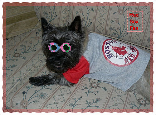 A Red Sox fan for over 40 years, Lilly Fougere of New Brunswick, Canada, has passed along the fanaticism to her cairn terrier, Jacqueline (Puppy Jack). 'She has become as ardent a fan as her human family,' writes Fougere.