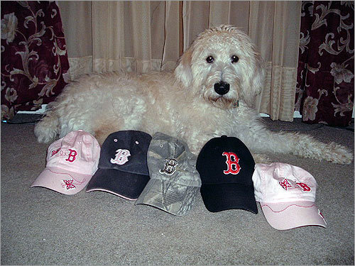 Jill Doerger's dog Remy of Baldwinsville, N.Y., is protective of the Sox -- he has to be. 'As we live in the Evil Empire, Remy barks at anyone trying to sneak up on our Red Sox flag... Here he is watching over the family hats, protecting them from the Yankee fans in the neighborhood.'