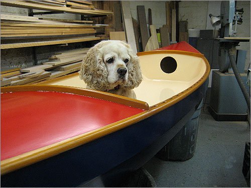 With an owner that builds small wooden boats in Winthrop, there's plenty of places to hide for Rugs each day.
