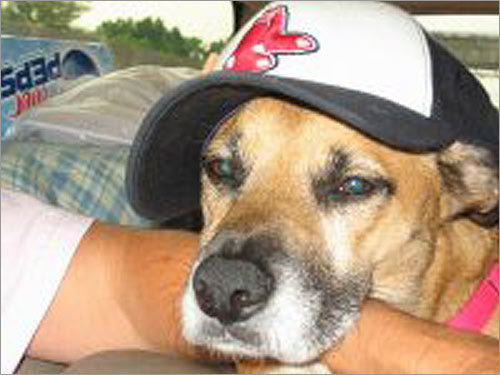 The Reynolds family in Virginia Beach, Va., has made a yearly pilgrimage to Ipswich for 27 years. The local culture has rubbed off on the pet: 'Our dog's name is Sadie and she is happy to be a Red Sox fan from the Deep South.'