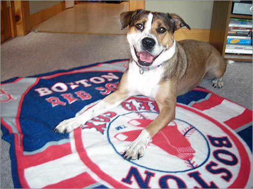 A good blanket for a good friend: Mary Reynolds, formerly of South Boston, writes 'Bailey loves the Red Sox and loves to lay on her Red Sox blanket.'