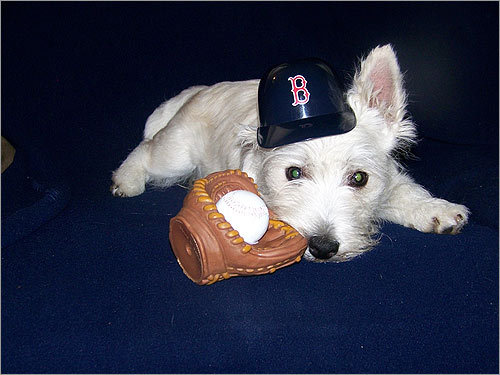 Ollie, who lives with his 'girlfriends,' Mary Jennings and Kathy Noonan in Cambridge, 'loves to watch the Sox beat up on their opponents.'