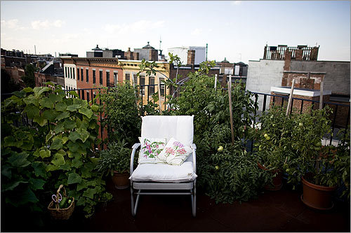 The North End top-floor dwelling had private roof rights, and she quickly got to work installing her urban oasis.