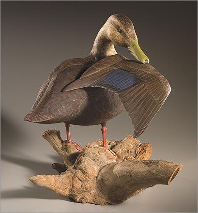 Preening Black Duck, Bob Brophy