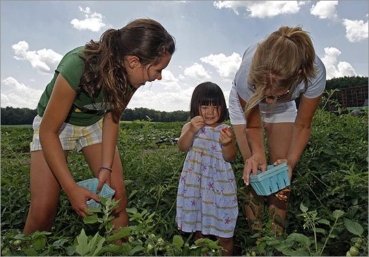 Kaitlyn Watson (left) joins the harvest with Lily Flaherty and her mom, Kathleen Flaherty, at Tangerini's farm in Millis last July.