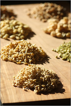 Globe Correspondent Ted Weesner Jr., a regular bread baker, decides to tackle sprouted loaves made with wheat berries, barley, lentils, soybeans, spelt, mung beans, chickpeas, and rye berries. Read the Globe article: Ancient bread sprouts anew (March 4)