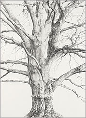 At almost 6 feet tall, Sandra Allen's grafted beech tree in 'Scion' is person-size.