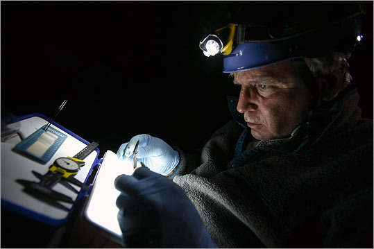 Kunz examines the wings of a little brown bat for evidence of damage caused by the fungus associated with white-nose syndrome. He and other researchers are conducting studies, among others, focused on how wing damage caused by the disease affects the bats' ability to navigate and whether they can effectively mount an immune response to white-nose.