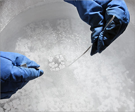 An heir and quite a few spares There are at least 20,000 frozen embryos stored in Massachusetts clinics; at Reproductive Science Center of New England in Lexington, some are 20 years old.