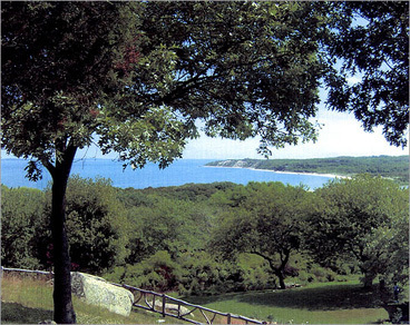 """By Elizabeth Gehrman, the Globe Magazine 11. West Tisbury Search Find homes in West Tisbury More community info A quiet life is what you'll get if you move to West Tisbury. Located in south-central Martha's Vineyard, on the other side of the airport from bustling (in relative terms) Vineyard Haven, Oak Bluffs, and Edgartown, West Tisbury is an alcohol-free zone that's all about farmland, with an agricultural fair every summer, roadside farm stands, and a 36-year-old farmers' market. It has a Green Acres-tiny town center, with a little Congregational church, a country store, and a town hall. """"If you blink your eyes, you're through the town,"""" says Renee Ortiz, co-owner of Martha's Vineyard Seacoast Properties in Edgartown. Much of the housing stock is newer, but still in keeping with the island's understated grace. Seclusion is valued here, with many homes tucked away along winding dirt roads that lead to the water."""