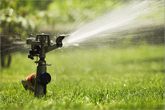 Many gardeners are moving away from chemical treatments for their lawns toward more eco-friendly methods that need less watering and mowing.