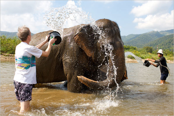 Visitors to the park treat the elephants to daily bathings in a local river.