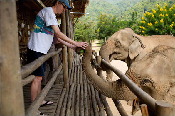 Visitors and volunteers are shown how to feed the elephants by hand.