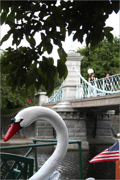 Overhanging greenery helps to frame this shot of the Swan Boats in the Public Garden.