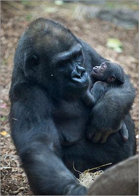 Kiki and her newborn, nicknamed Kit