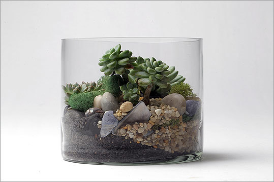 Lyndsay Maver's terrariums (she calls them, and her business, Lynzariums) are long-lasting alternatives to traditional arrangements. She plants succulents, cactuses, and air plants among moss, rocks, and shells in recycled and found vessels, from Ball jars to copper basins. She sells through her website and at the two local Hudson stores. FOR MOM: colorful succulents and blue mussel shells, stacked in glass so the layers are all visible, $55 http://www.lynzariums.blogspot.com ; Hudson, 312 Shawmut Avenue, Boston, 617-292-0900, and 61A Central Street, Wellesley, 781-239-0025, http://www.hudsonboston.com