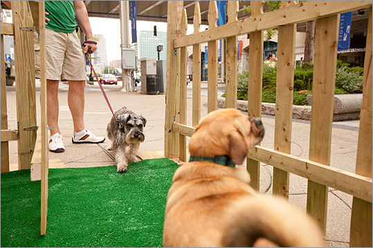 Winston, a miniature schnauzer, takes a cautious first step into Yappy Hour with his owner Ted Vitelli of South Boston.