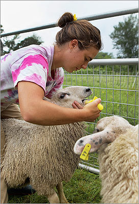 Emily DeFeo administers garlic juice during the de-worming of sheep at the Farm School in Athol. DeFeo is a participant in the Learn to Farm program, a yearlong course that trains adults in sustainable agriculture. The $12,500 tuition includes instruction and room and board. Read the story