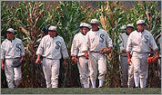 Classic baseball movies