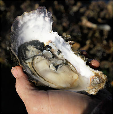 Learn to shuck oysters