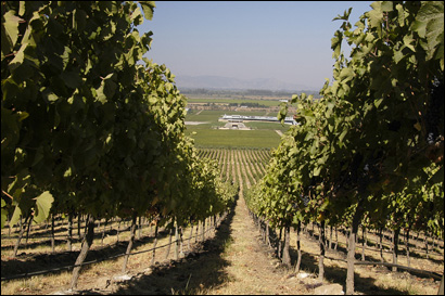 The Montes vineyard near Santa Cruz, in the heart of Colchagua Valley, and its familiar label have become part of Chile's reputation among oenophiles.