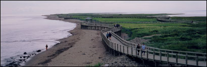 Boardwalks lead through La Dune de Bouctouche, a park that stretches along the New Brunswick coast for more than seven miles.