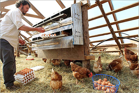 Eggs from Stony Brook Valley Farm in Granby are sold to those enrolled in Red Fire Farm's vegetable CSA.