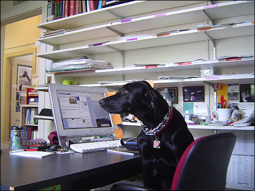 Tabasco Jones comes to work regularly at a publishing office in Cambridge.