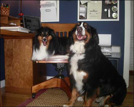 Dasher (a Shetland Sheepdog) and Denver (a Bernese Mountain dog) go to work with their owner every day at their home office in Plymouth.