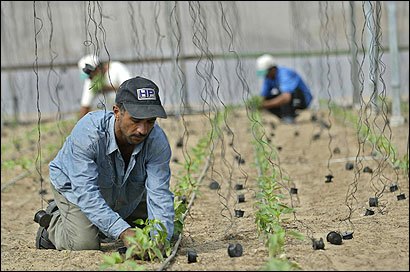 Palestinian farmers worked at a greenhouse in Gaza.