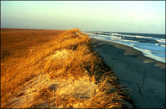 3 - Ocracoke Island - Outer Banks, N.C.